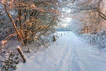 Winter bospad van Peter Bolman