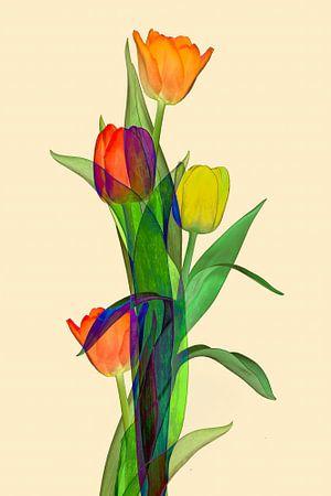 tulpen  fantasie met veel kleuren II van Klaartje Majoor