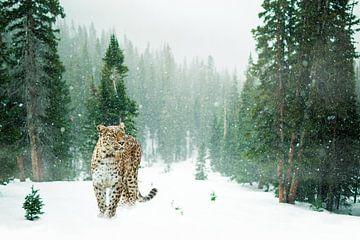 Leopard von Felix Brönnimann