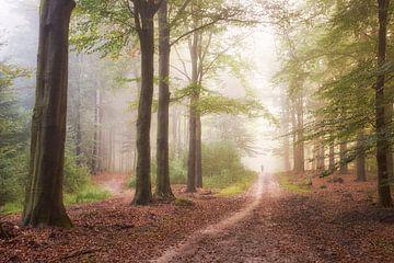 Joggen in de mist