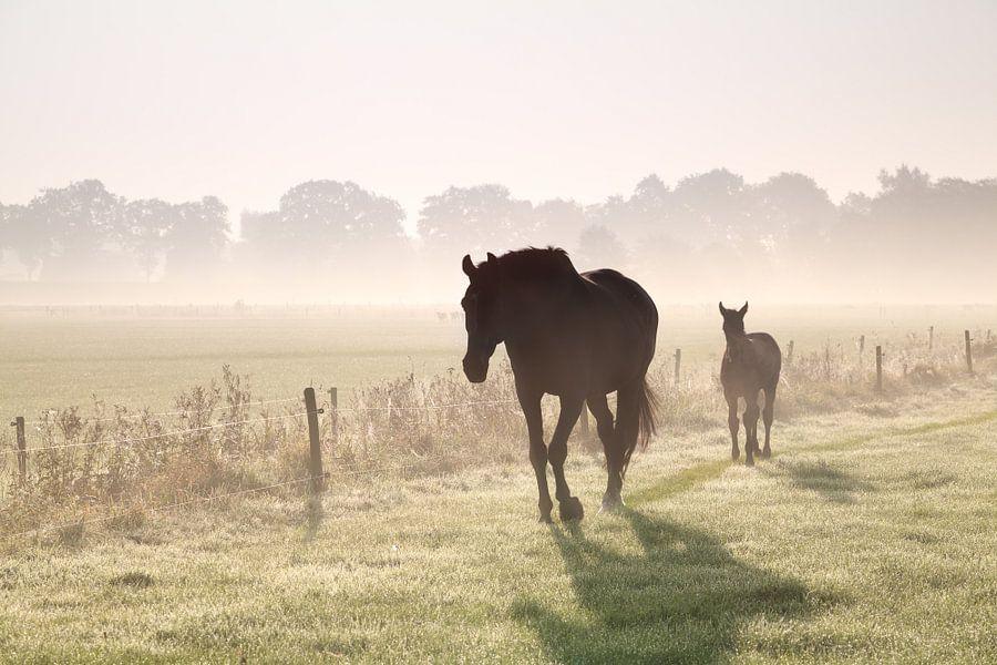 Walking in the mist