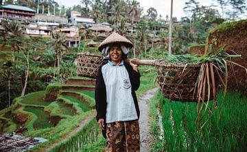 Ein Reispflücker auf Bali (Indonesien). von Claudio Duarte