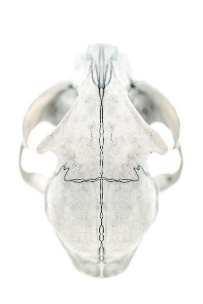 Cat Skull I van Cor Ritmeester