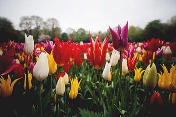 Tulpen uit Amsterdam van Thomas van der Willik
