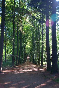 Am Ende des Waldweges gibt es Licht. von Jurjen Jan Snikkenburg