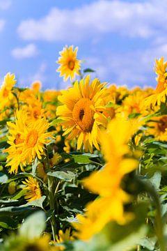 Zonnenbloemen von Studio  Milaan