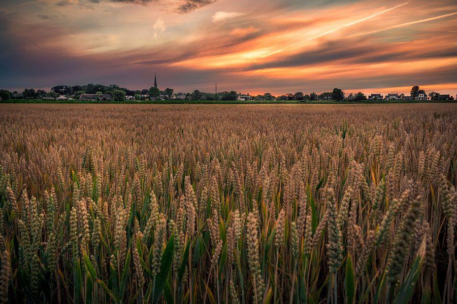 Wheat field at sunset van Johan Viele