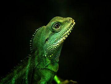 Reptielen, Hagedis von Rob Jansen