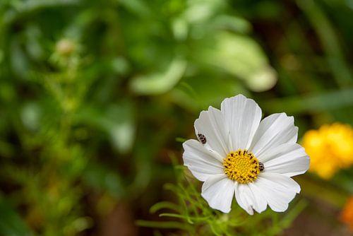Weiße Blüte mit Insekten