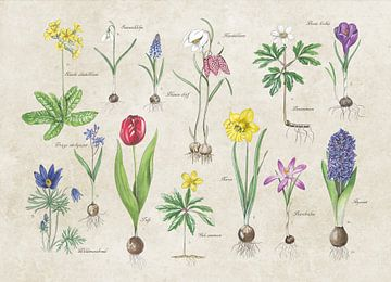 Frühlingsblüher auf alter Platte von Jasper de Ruiter