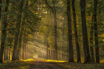 Sunbeams von D. Henriquez