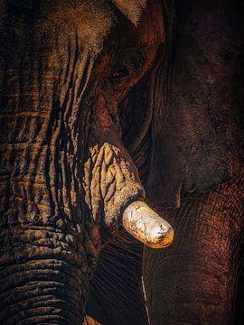Loxodanta Africana_SQ van Joris Pannemans - Loris Photography