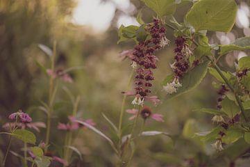 bloemen part 14 van Tania Perneel