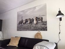 Klantfoto: Schapen in de polder van MS Fotografie | Marc van der Stelt, op canvas