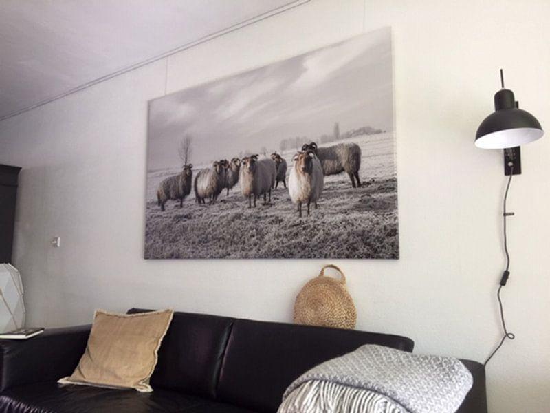 Photo de nos clients: Moutons dans le polder sur MS Fotografie | Marc van der Stelt