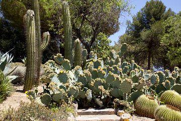 Cactus behang; grote en kleine cacti van Veerle Van den Langenbergh
