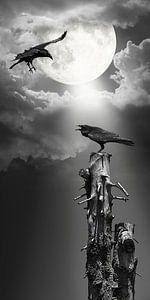 Raaf in het maanlicht