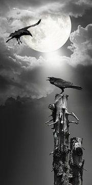 Raaf in het maanlicht van Monika Jüngling
