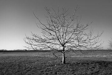 Winterlandschap zwart wit von Cilia Brandts