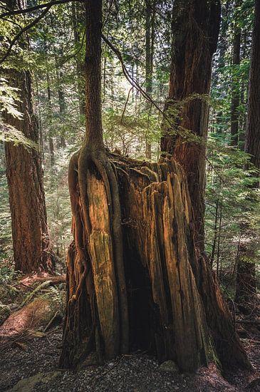 De houten cirkel van het leven van Joris Pannemans - Loris Photography