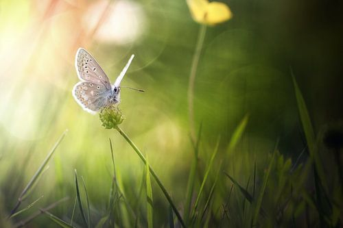 The beauty of the butterfly van Bob Daalder
