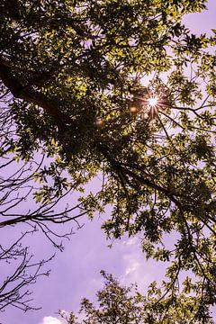 Lage Bergse Bos - Sonne Nr. 1 von Deborah de Meijer