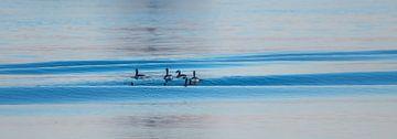 In the wave pool van Ingeborg Ruyken