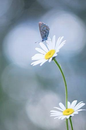 Vlinder in mooi licht.