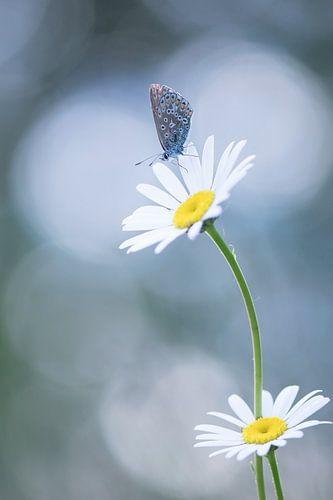 Schmetterling in schönen Licht. von Francis Dost