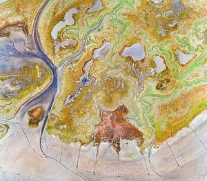 Texel - Le rauque - Red Marsh samphire 08