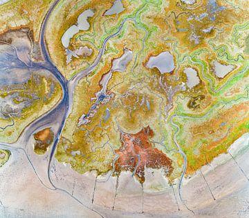 Texel - De Schorre - Rode Zeekraal 08 van Texel360Fotografie Richard Heerschap