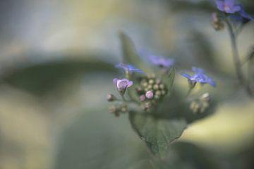 Blumen Teil 89 von Tania Perneel