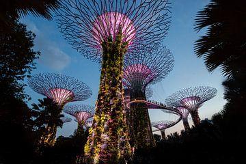 Garden Rhapsody Singapore, Marina Bay Skywalk van Ellis Peeters