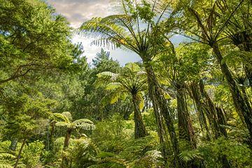 Tropisch bos bij Hahei, Nieuw Zeeland van Christian Müringer