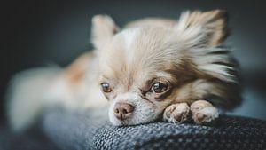 hond van Bjorn Brekelmans