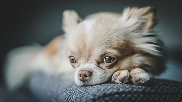 Hund von Bjorn Brekelmans