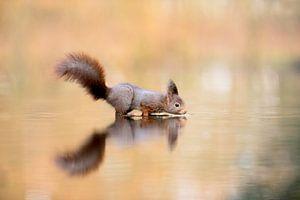 De drinkende eekhoorn