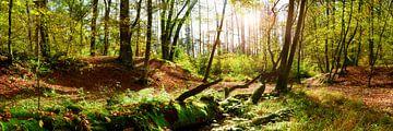 Naturbelassener Wald im Herbst von Günter Albers