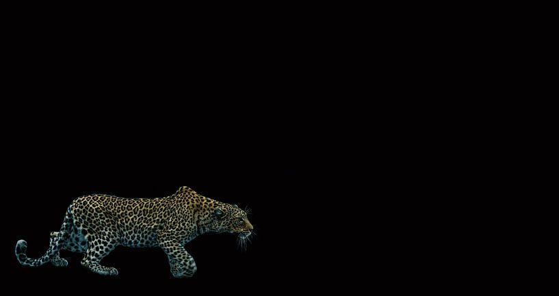 Sluipen in het donker van Sharing Wildlife