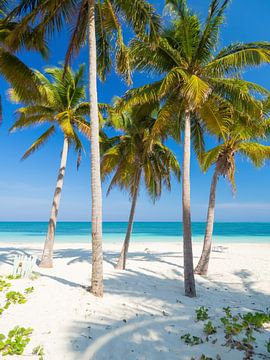 Palmbomen op het strand van tropisch paradijs Cayo Levisa, Cuba van Teun Janssen
