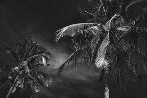 Palmbomen in Vietnam zwart/wit