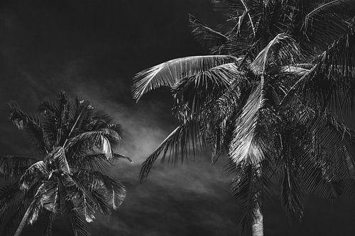 Palmbomen in Vietnam zwart/wit van