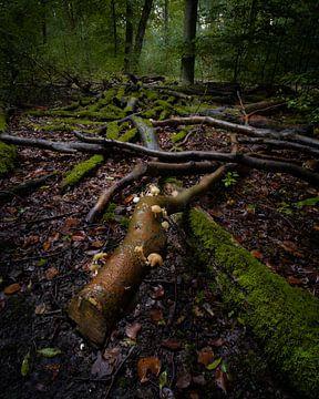 Vergane glorie in het bos van Koen Sachse