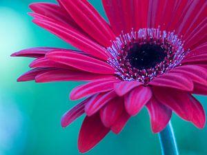 Flowerpower Gerbera van bird bee flower and tree