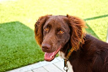 Hond (1) van Norbert Sülzner