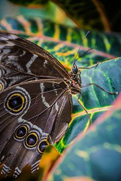 Schmetterling von Sylvia Schuur
