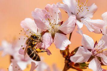 Bijen op het werk van Hermann Kollinger