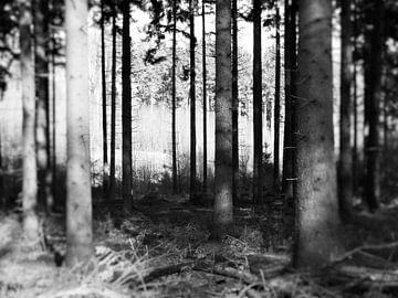 Kalt Wald von sterre Jansen