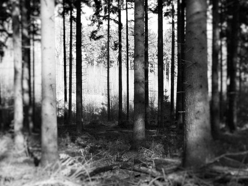 Bosrijk van sterre Jansen