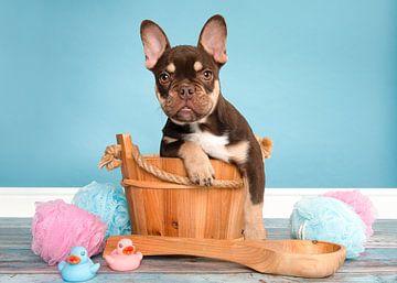 Französische Bulldogge Welpe schön im Bad von Elles Rijsdijk